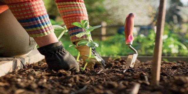 طريقة زراعة الخضروات في المنزل
